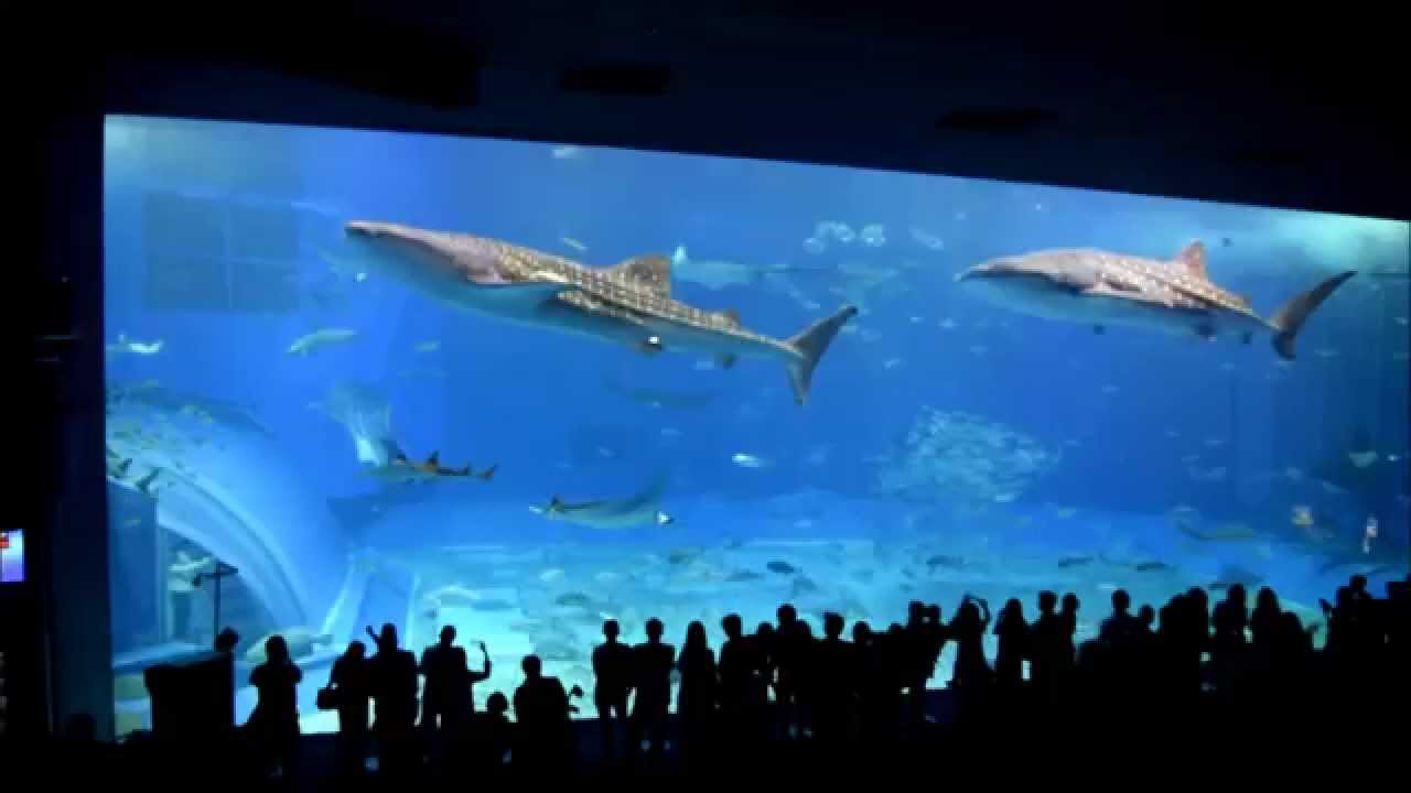 2014 Japan Holiday - Okinawa Churaumi Aquarium - Whale ...