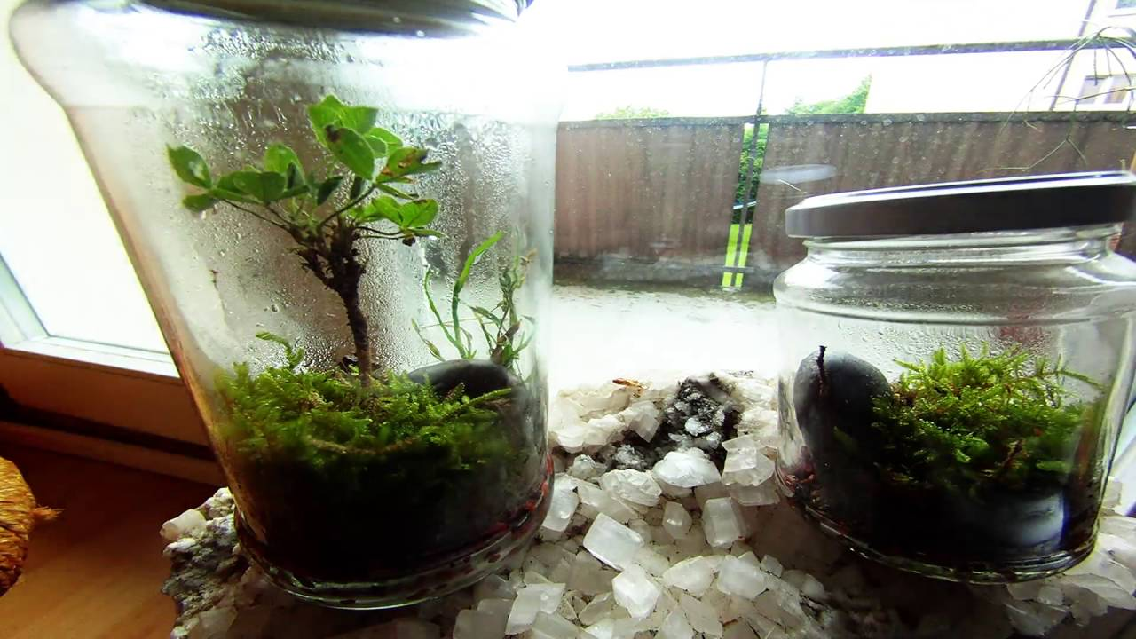 Eternal Terrarium Timelaps Youtube