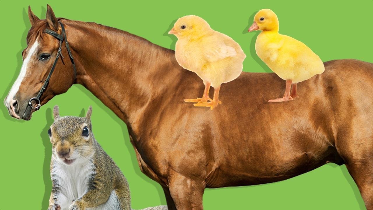 Çiftlik ve Orman Hayvanları