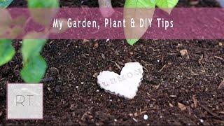 My Garden, Plant & DIY Tips | Rachel Talbott