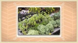 Raised Bed Vegetable Garden Ideas