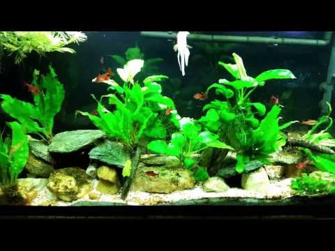 Planted Tank With High Nitrates? Here's Why.