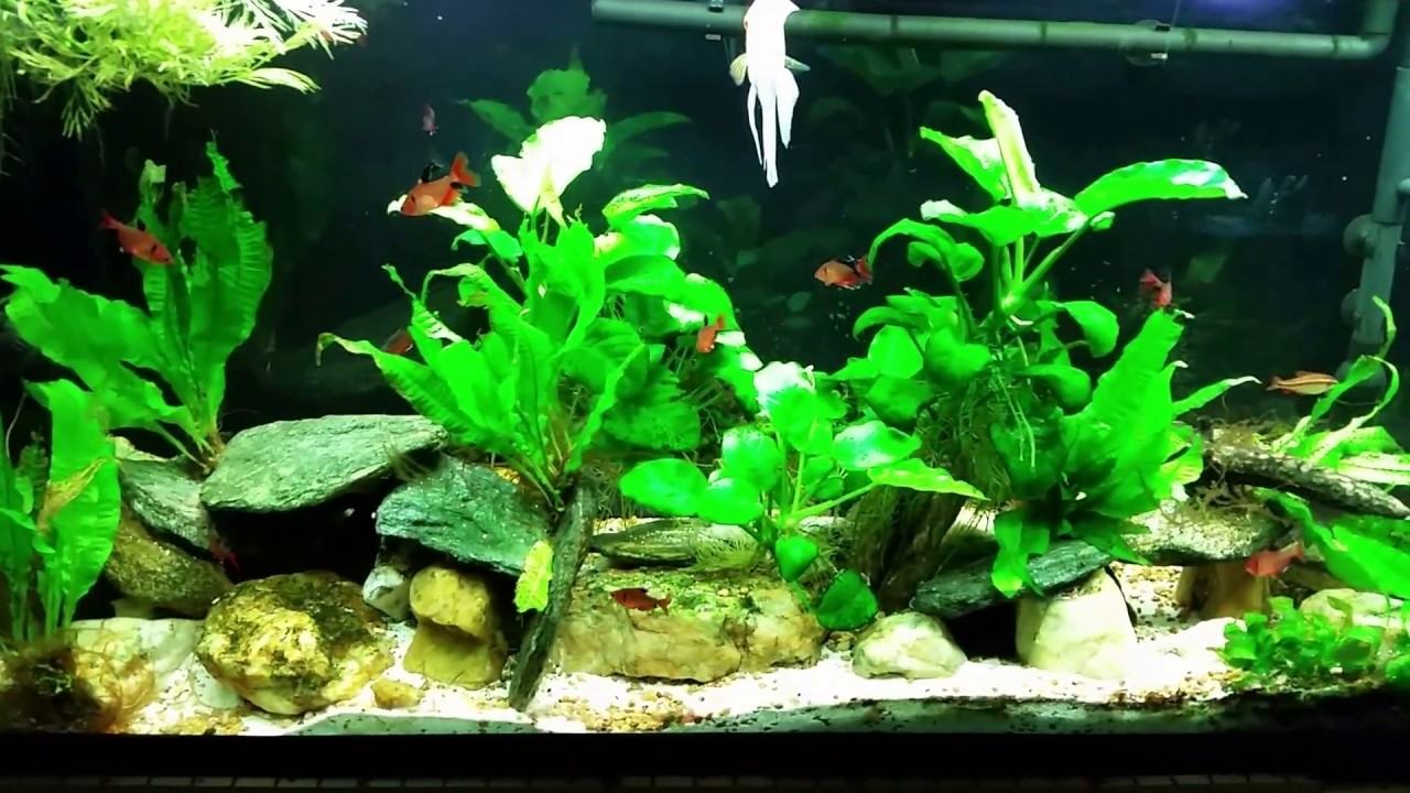 planted tank with high nitrates here s why youtube