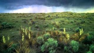 Robert Rich - Erasing Traces