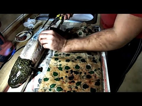 Catch And Cook  Ice Fishing For Burbot