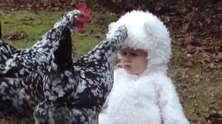 Cute baby fun with chicken //