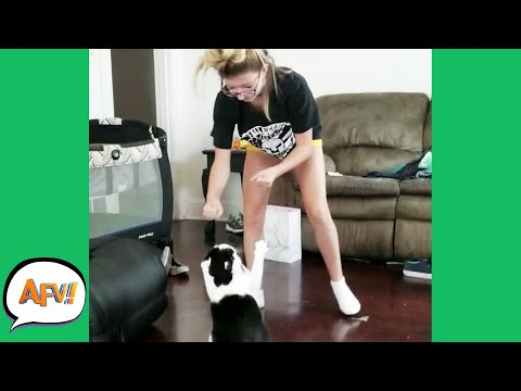 PAWS UP for the FAIL! 😹   Funniest Cats   AFV 2020