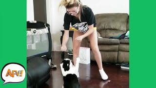 PAWS UP for the FAIL! 😹 | Funniest Cats | AFV 2020