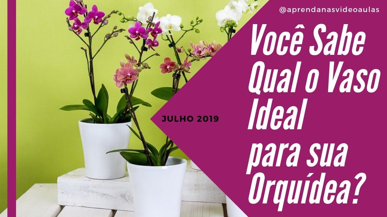 Você Sabe Qual o Vaso Ideal para sua Orquídea? Aprenda nas Vídeo Aulas