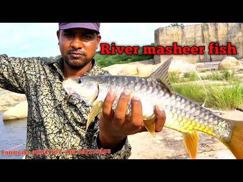 Golden Mahseer Fish | River Fishing Unique Fishing Trap