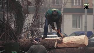 У Житомирі почали встановлювати головну новорічну ялинку