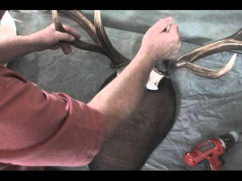 Replica Elk Skull Horn Mount