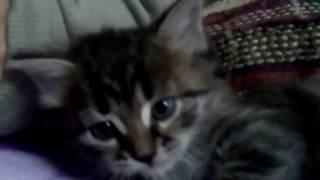 Красивые, воспитанные и в меру упитанные)) котята для вас, практически даром!!!