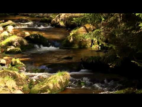 [Nature Sounds HD Stereo] Mountain stream, forest birds, cuckoo, woodpecker