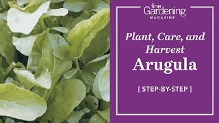 Arugula - Plant, Care, and Harvest