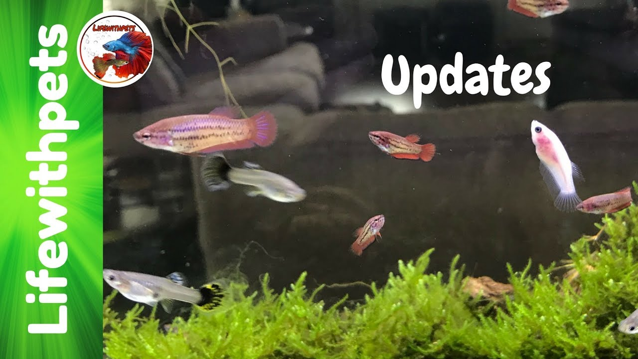 Updates on betta fish and ich outbreak youtube for Betta fish ich