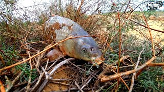 Ловля сазана на жмых и поиск судака в Астрахани Два дня на рыбалке