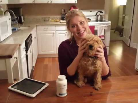 What I Learned About Omega-3 Supplements For Dogs And The Quality Of Nutrition Strength.