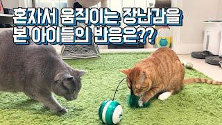 [춘오별이]움직이는 장난감을 본 아이들의 반응은?? (…