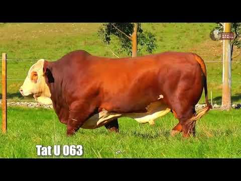 LOTE 02   TAT U063 BRAFORD SÃO BENTO