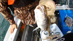 Mussel farms waikawau - Fishing Coromandel NZ