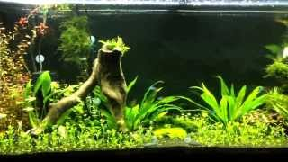 55 Gallon Dirt Planted Tank With Ray 2 Dd Diy Co2