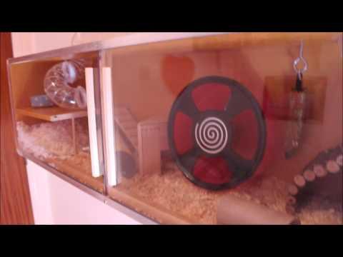 DIY Bookshelf Hamster Cage