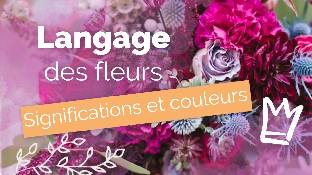 LANGAGE FLEURS: signification, couleur... 💐 Bien choisir ...