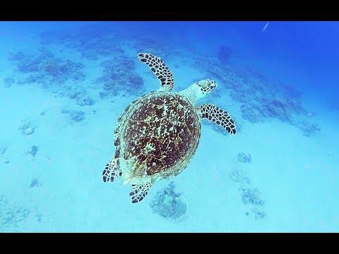 Рыбы Красного моря C  назвазваниями Каталог 1й фильм Опасные (с 13:22 фильма) Египет Иордания Акаба
