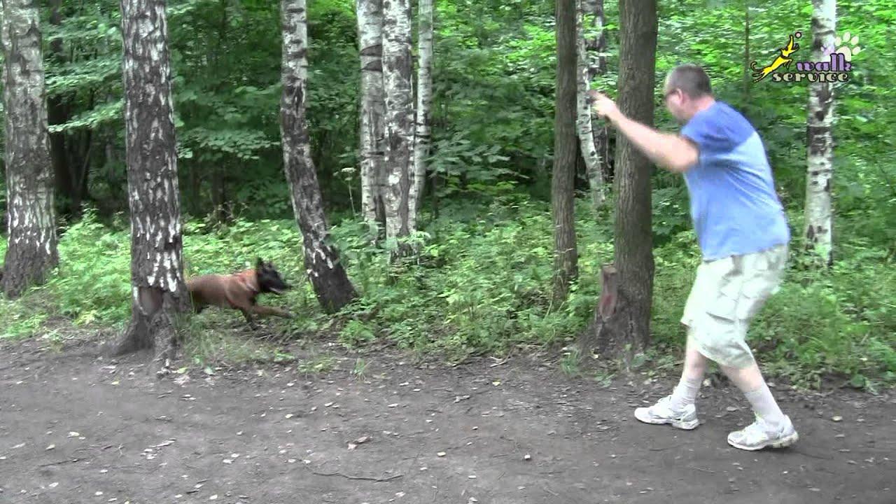 Дрессировка собак, как приучить щенка правильно играть 5