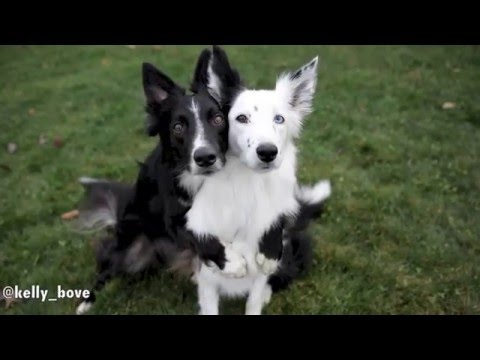 Dogs Posing for Pictures