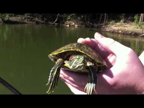 Catching a Turtle in a HUGE lake!