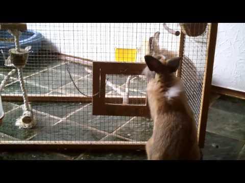 Cleaning the bird cage/Den Vogelkäfig saubermachen