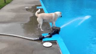 Funny...This Dog Isn't The Smartest Little Guy