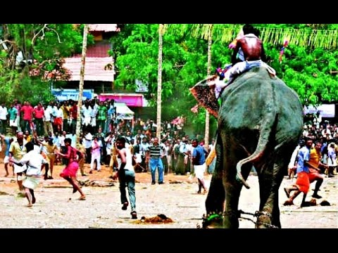 Elephant Attack In Kerala 2012 Thrissur Pooram...