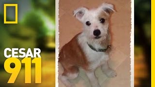Case File: Toby | Cesar 911