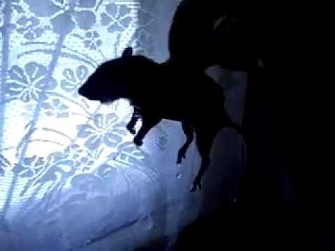 Как вывести мышей в частном доме? Отличный способ, проверено.