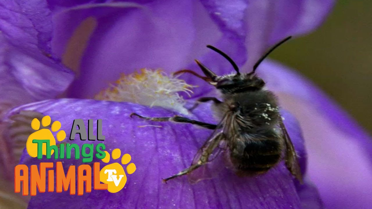 Bees animals for children kids videos kindergarten preschool bees animals for children kids videos kindergarten preschool learning youtube sciox Choice Image