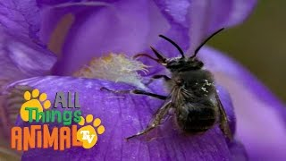 BEES | Animals for children. Kids videos. Kindergarten | Preschool learning