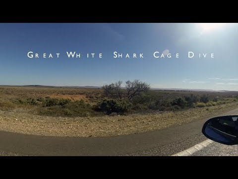 Australia (Great White Shark Cage Dive w/ Calypso Star Charters)