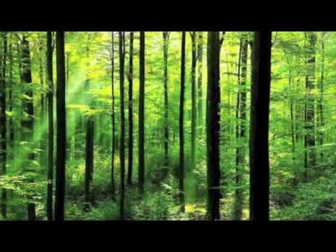 The Secret Forest, Douglas Wood, Deep Woods Deep Waters