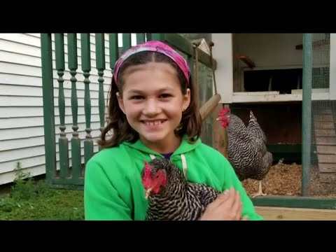 12-year-old Girl In Huntington Woods Fights To Have Chickens As Pets