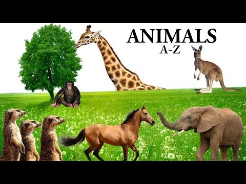 Learn BABY FARM ANIMAL NAMES (Real Animals) Babies, Toddlers, Preschool, K 3 from YouTube · Duration:  4 minutes 48 seconds