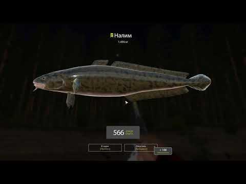 Русская рыбалка 4 - река Вьюнок - Налимы на глубокой яме