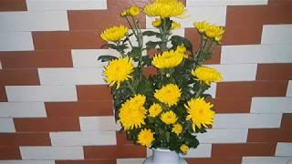 Cách cắm hoa cúc 9 bông lọ lục bình đơn giản đẹp.