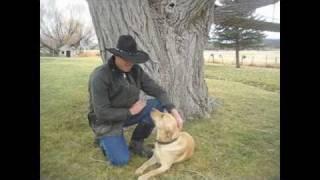 Training A Young Labrador Retriever