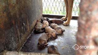 South Korean Dog Meat Industry 남양주 새끼 강아지 Puppies in Namyangju