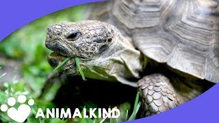 Tommy the tortoise needs a new home