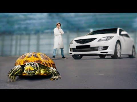 Насколько прочный панцирь у черепахи? - Ruslar.Biz