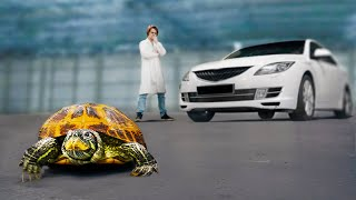 Насколько прочный панцирь у черепахи?
